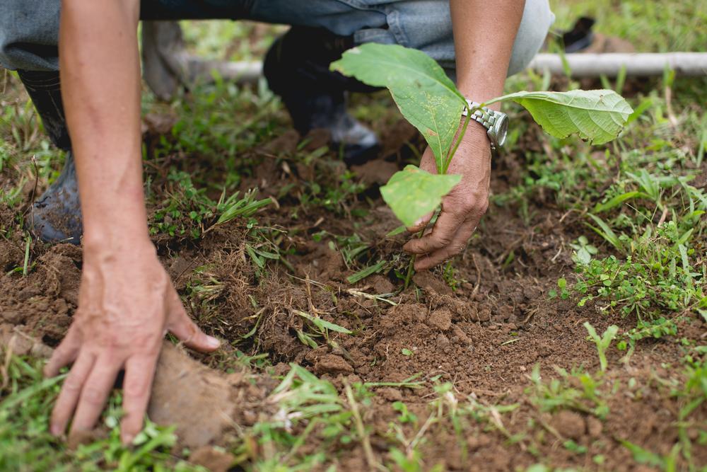 ecovillaggi e agricoltura