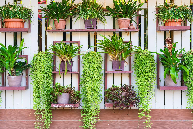 Giardino verticale come tendenza per il giardino 2021